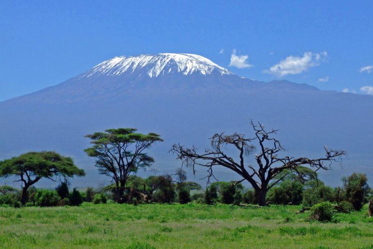 mount-kilimanjaro-landscape-rising-behind-the-trees